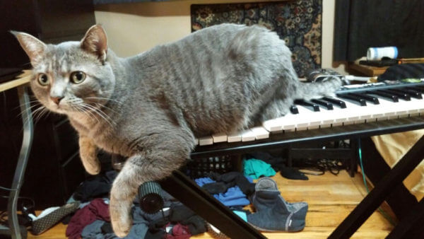 bob the cat on my synthesizer