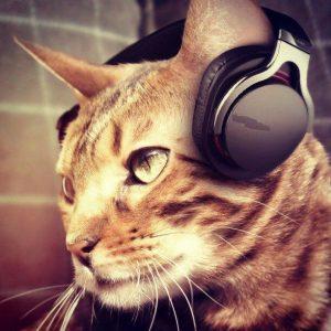 cat wearing headphones